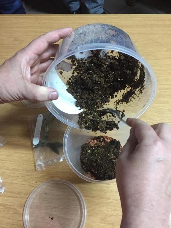 Becherkultur: Einfüllen des Substrats