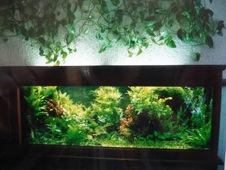 Das Pflanzenaquarium von Peter Krause