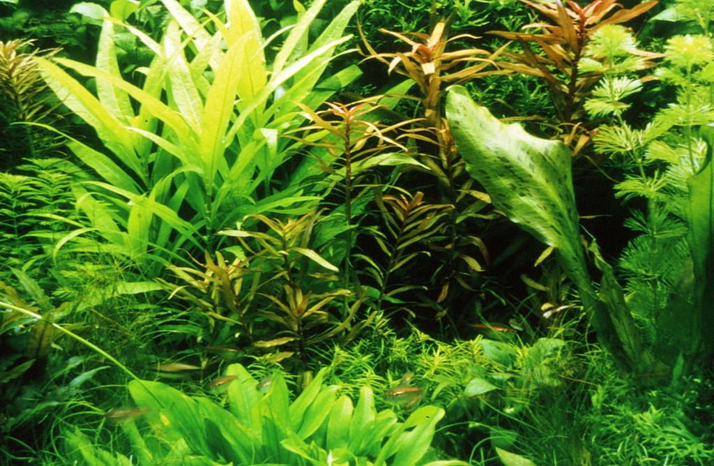 Pflanzenbecken von Mandred Herrmann