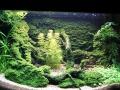 96Aquarium Große Webansicht